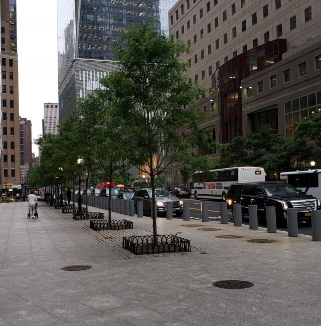 Battery Park City | Tree Removal & Replacement